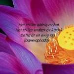 6.Lotus Bali Hat 3